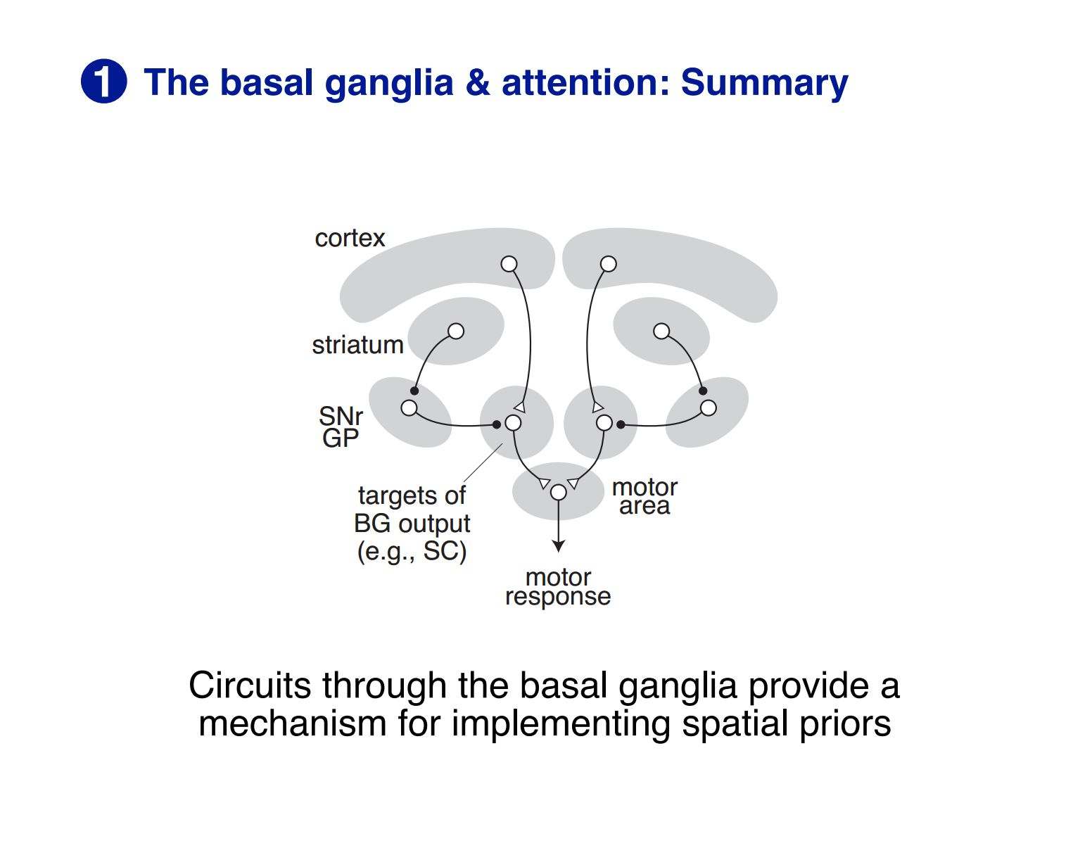 Basal ganglia and attention