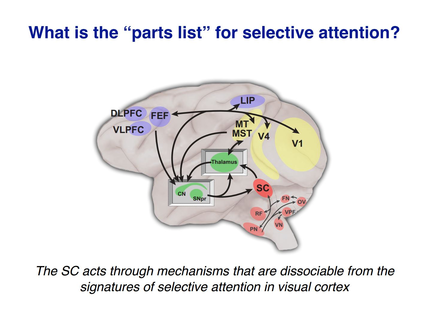 SC mechanism selective attention