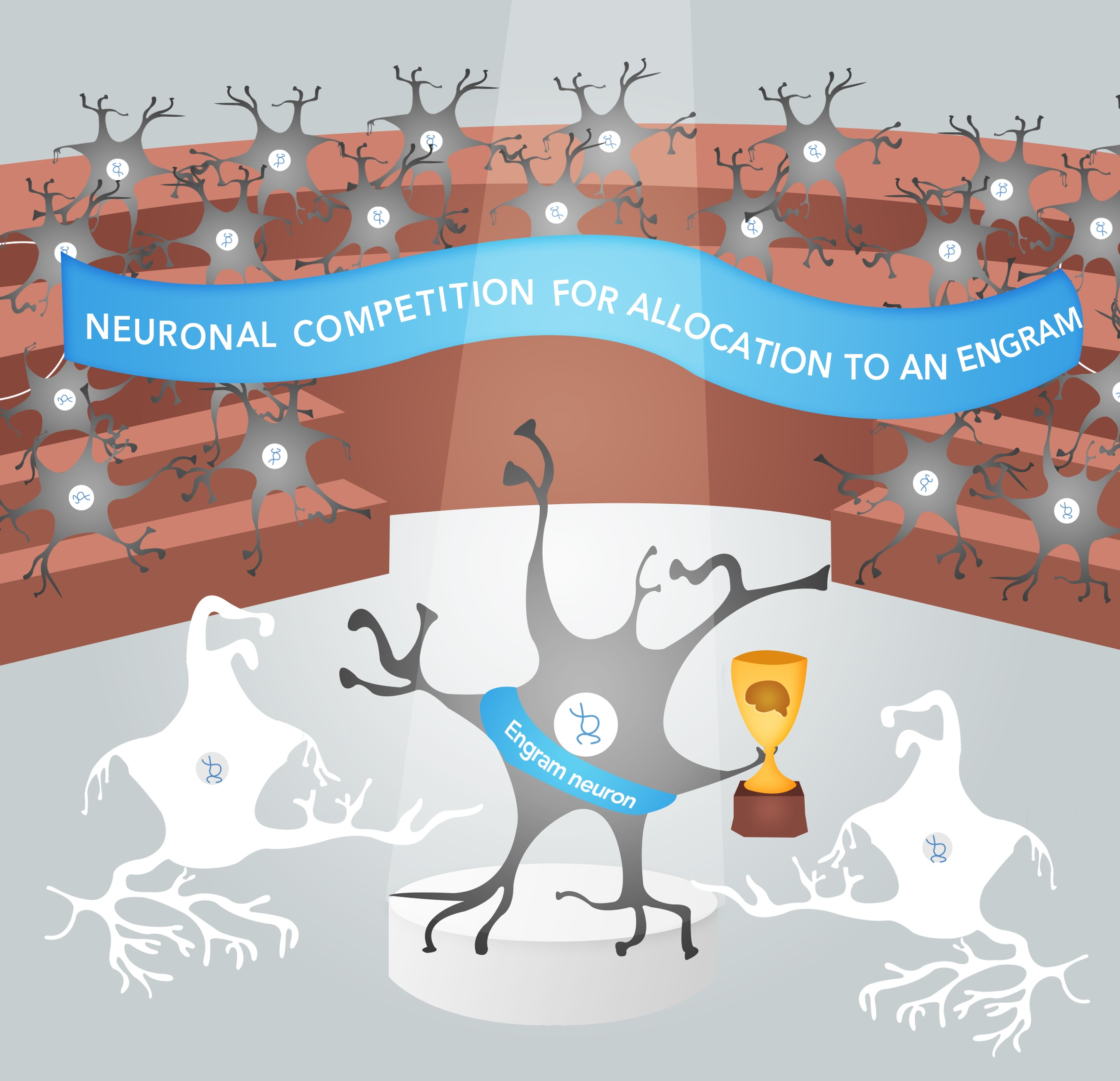 Neuronal competition for allocation to engram