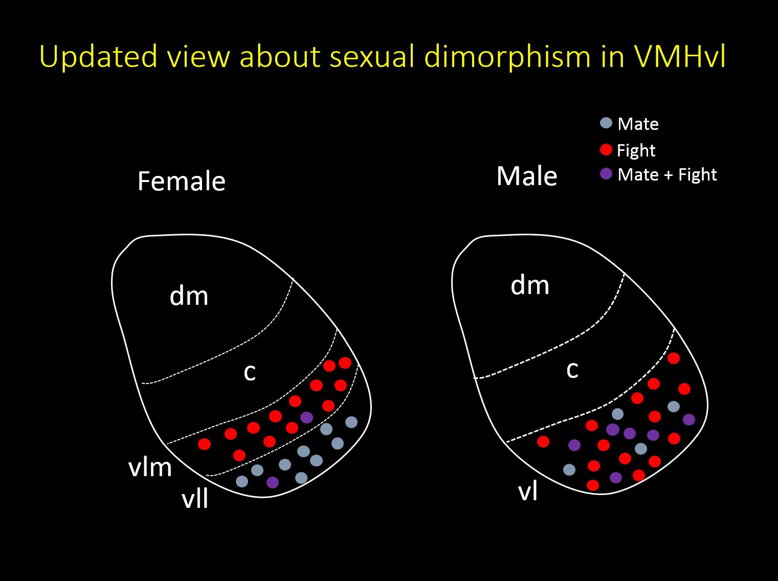 Sexual Dimorphism in VMHvl