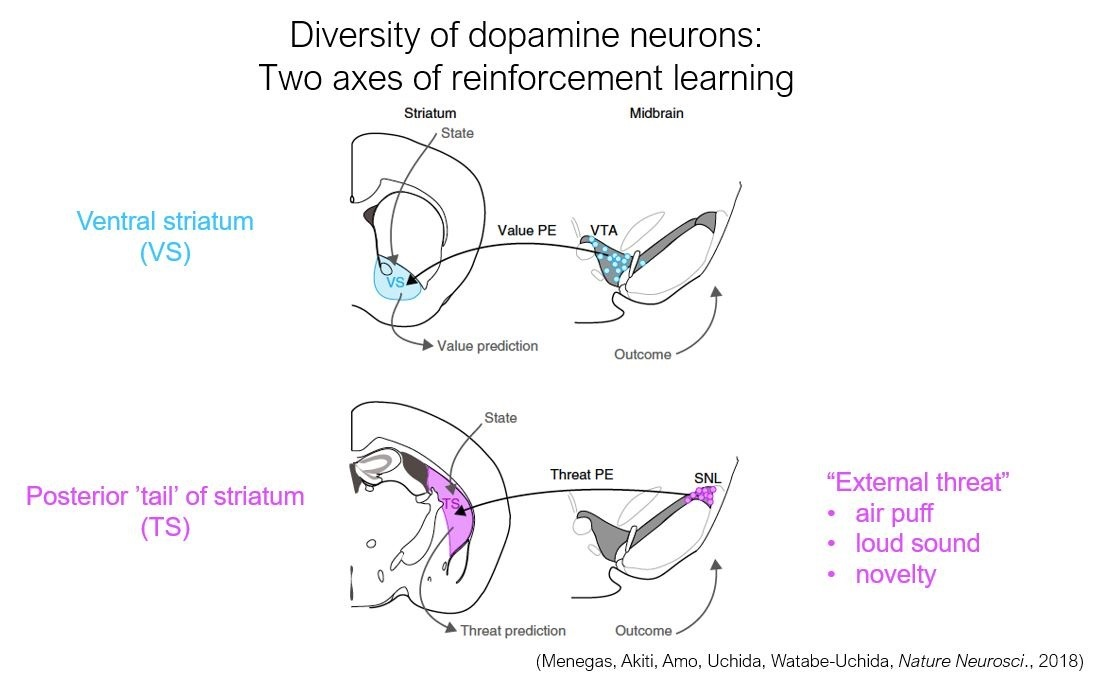 Diversity of dopamine neurons
