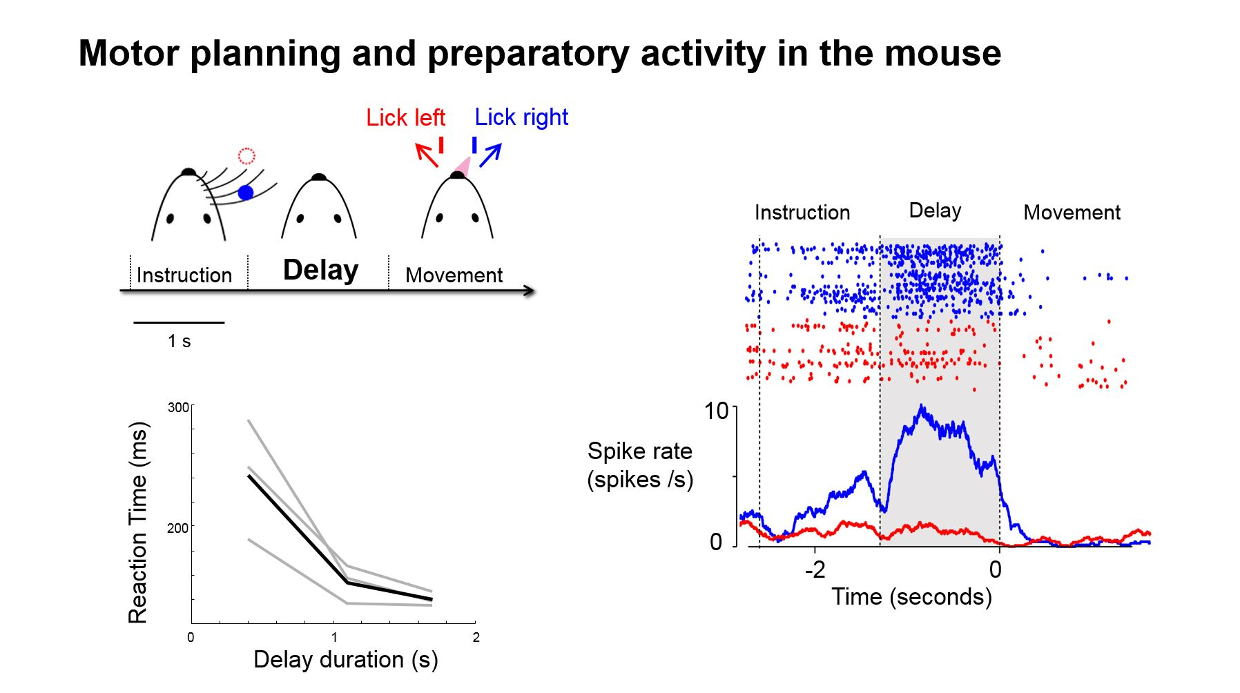 Motor planning and preparatory activity in the mouse