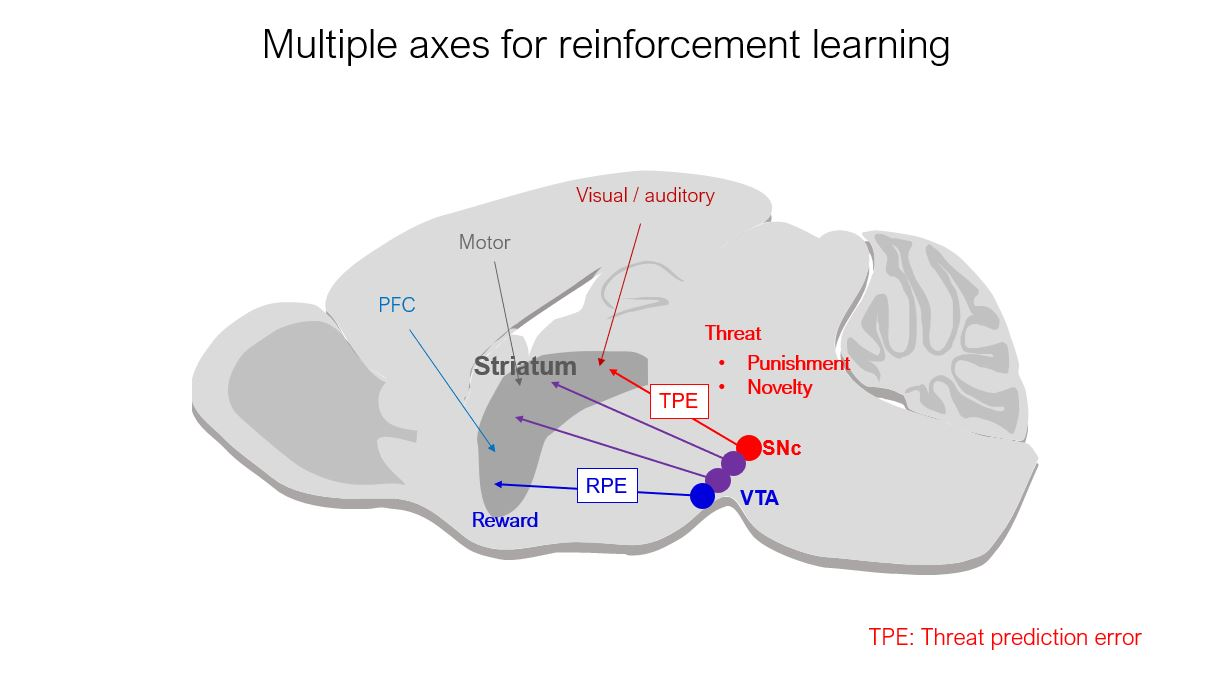 Multiple axes for reinforcement learning