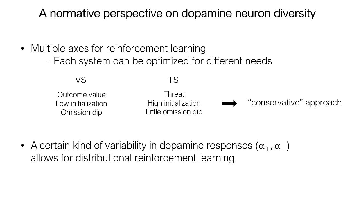Normative perspective on dopamine neuron diversity