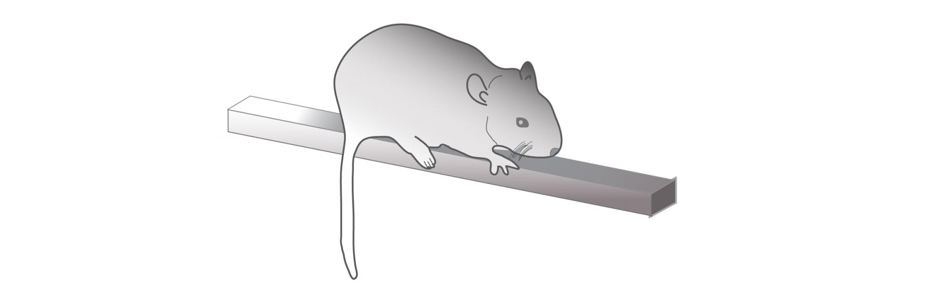 Mouse on a balance beam