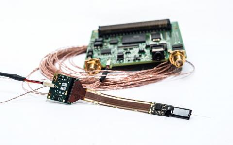 Image of a Neuropixels probe
